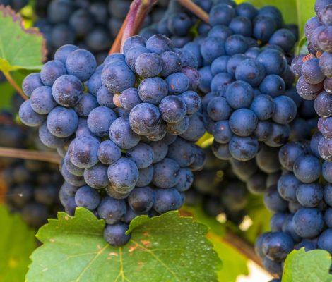 grapes-4617986_1920